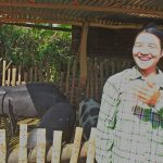 Village pig farm